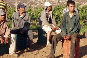 A group of grape pickers. Photo by Tomas Castelazo, licensed under https://creativecommons.org/licenses/by/3.0/deed.en