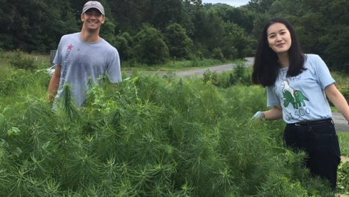 Students volunteer at the National Arboretum.